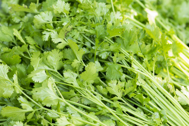 The Indian Parsley